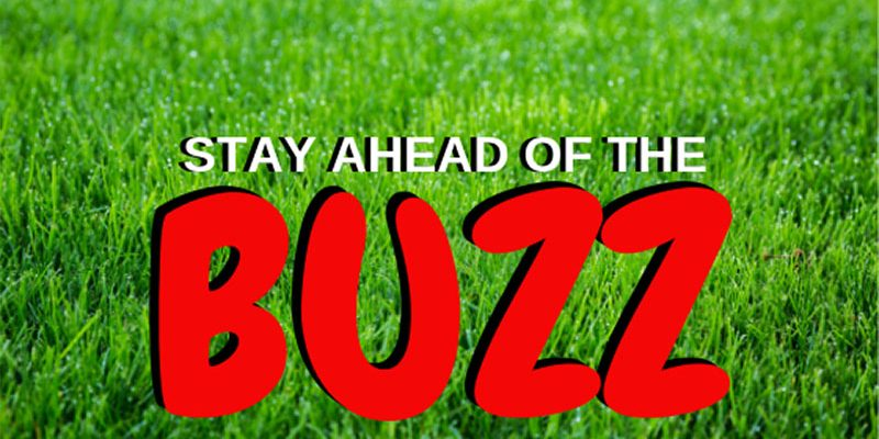 stay ahead of the buzz blog