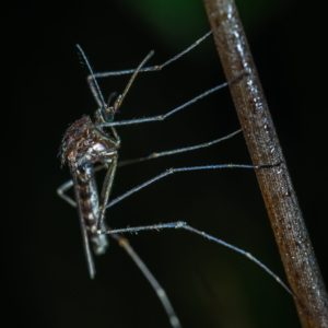 Stay Ahead of the Buzz: Mosquito and Deer Control Information 1