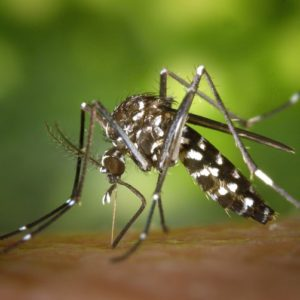 Stay Ahead of the Buzz: Mosquito and Deer Control Information 2