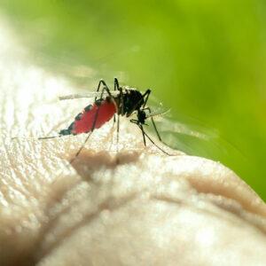 mosquito biting man's hand