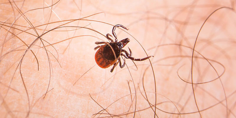 keep ticks and fleas out of yard
